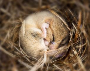 Hayvanlar kış uykusuna neden yatar?