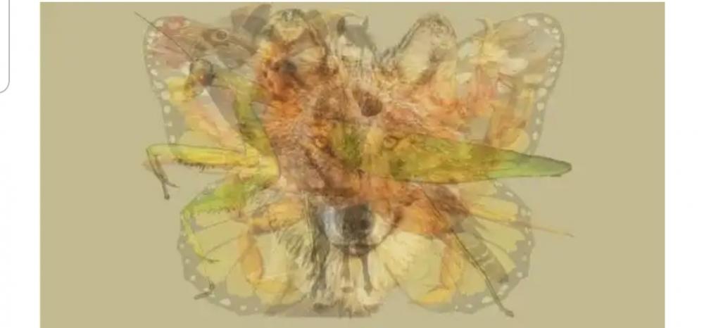 Resimde ilk hangi hayvanı gördünüz ? Açıklama kısmını da okuyun