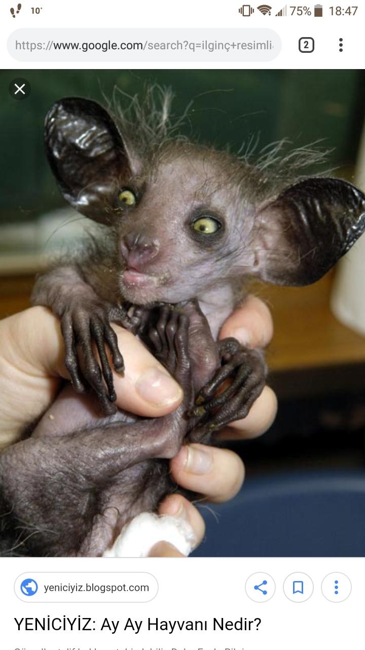 Minnak hayvan dedim ama foto eklememisim haydi bilin bakalim nedir bu hayvan?